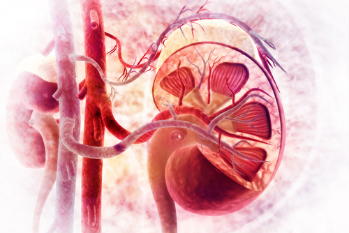 Protein Levels in Blood and Urine Can Signal That AAV Is Affecting Kidneys, Study Finds