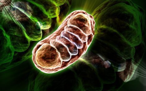 Mitochondrial DNA May Serve as Urinary Biomarker of Kidney Damage, Chinese Study Suggests